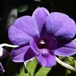 Какие нужны удобрения для комнатных растений?