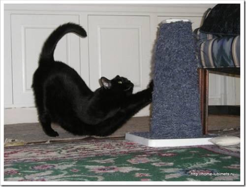 Что сделать, чтобы кошка самостоятельно точила когти?