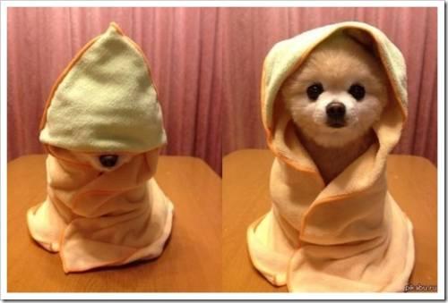 Этапы купания собаки