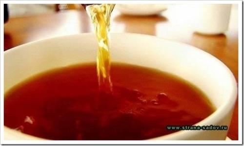 Принципы приготовления чая с боярышником
