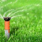 Когда сеять газонную траву