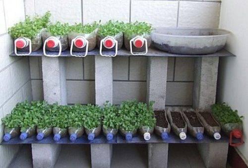 в чем выращивают рассаду