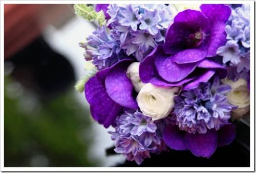 Важность чистого цвета орхидей