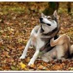 Как избавить собаку от блох?