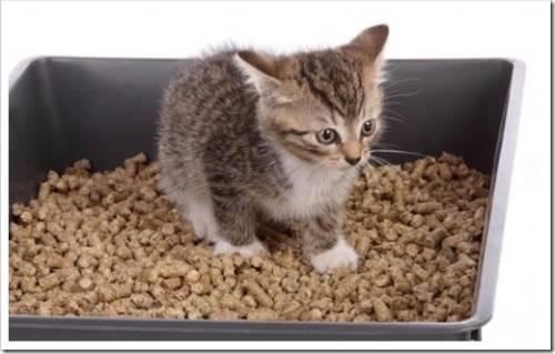 Наполнитель для лотка кошки