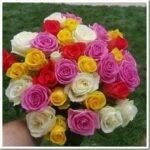 Какие цвета роз сочетаются в букете?