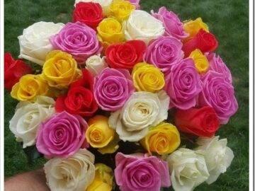 Цвета роз, которые пользуются популярностью