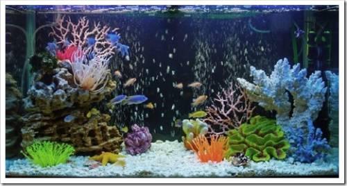 Водоросли в аквариуме