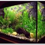 Какие водоросли должны быть в аквариуме?