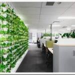 Вертикальное озеленение офисов: что это и как делается