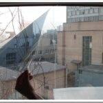 Как делается тонирование окон в квартирах и домах