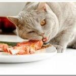 Чем кормить британского котенка в домашних условиях