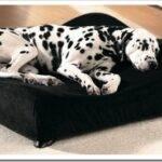 Виды лежанок для собак и как выбрать