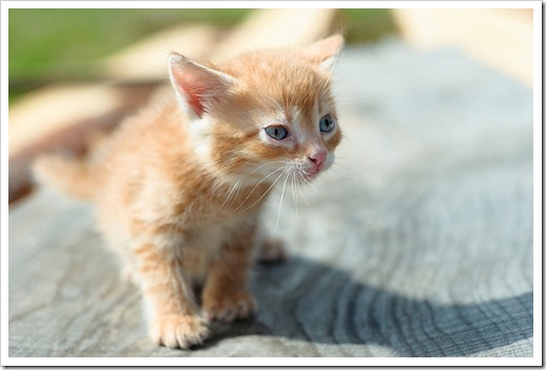 Что делать, если подбрал кота на улице?