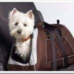 Как правильно выбрать летнюю сумку-переноску для собак мелких пород