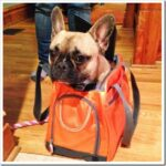 Сумка-переноска для собак: подбираем по безопасности и характеру животного