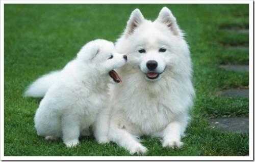 Собака – как маркер дружбы