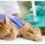 Что делать, если кошка неизлечимо больна